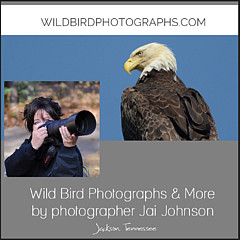 WildBird Photographs - Fine Artist