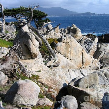 Pacific Grove and Pebble Beach Collection
