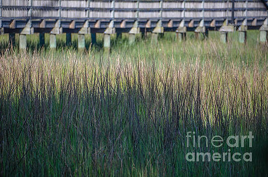 Dale Powell - Lowcountry Tall Marsh Grass