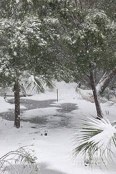 Dale Powell - Lowcountry Winter Wonderland