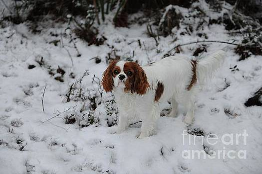 Dale Powell - Miss Daisy Enjoying the Snow