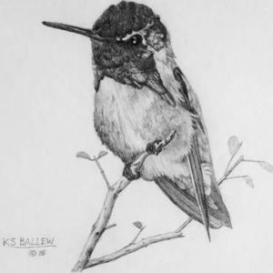 Summer Hummingbird Contest Art Competition
