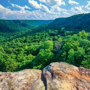 Tennessee State Parks Art Competition