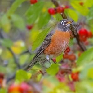 Your Best Shot of Birds AND Berries  Art Competition